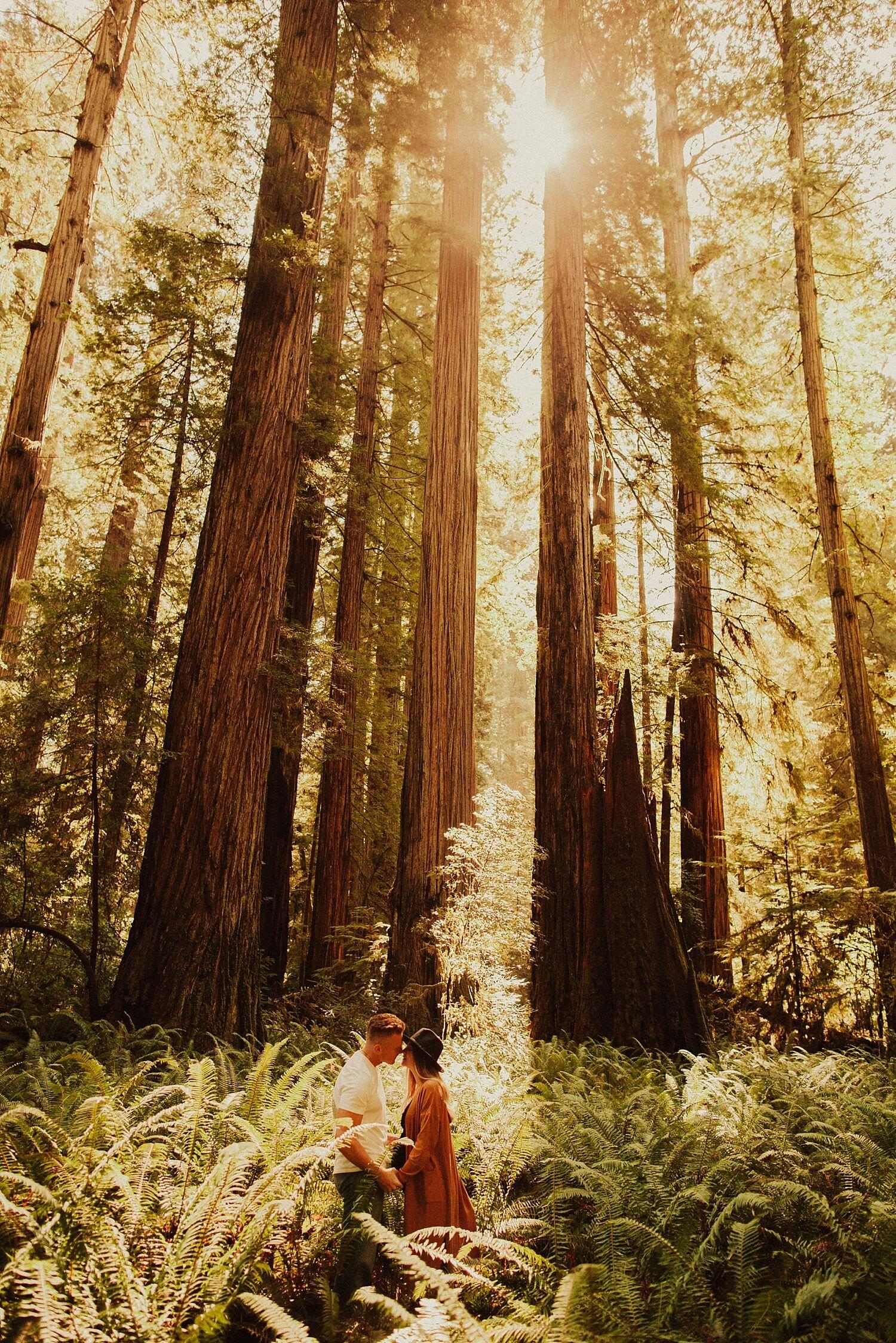 redwoods-california-maternity-photos_4300.jpg