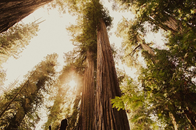 redwoods-california-maternity-photos_4311.jpg