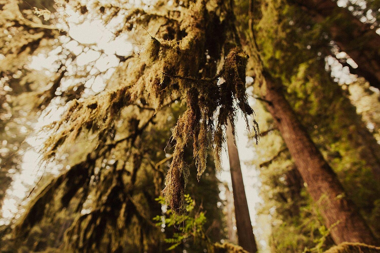 redwoods-california-maternity-photos_4313.jpg