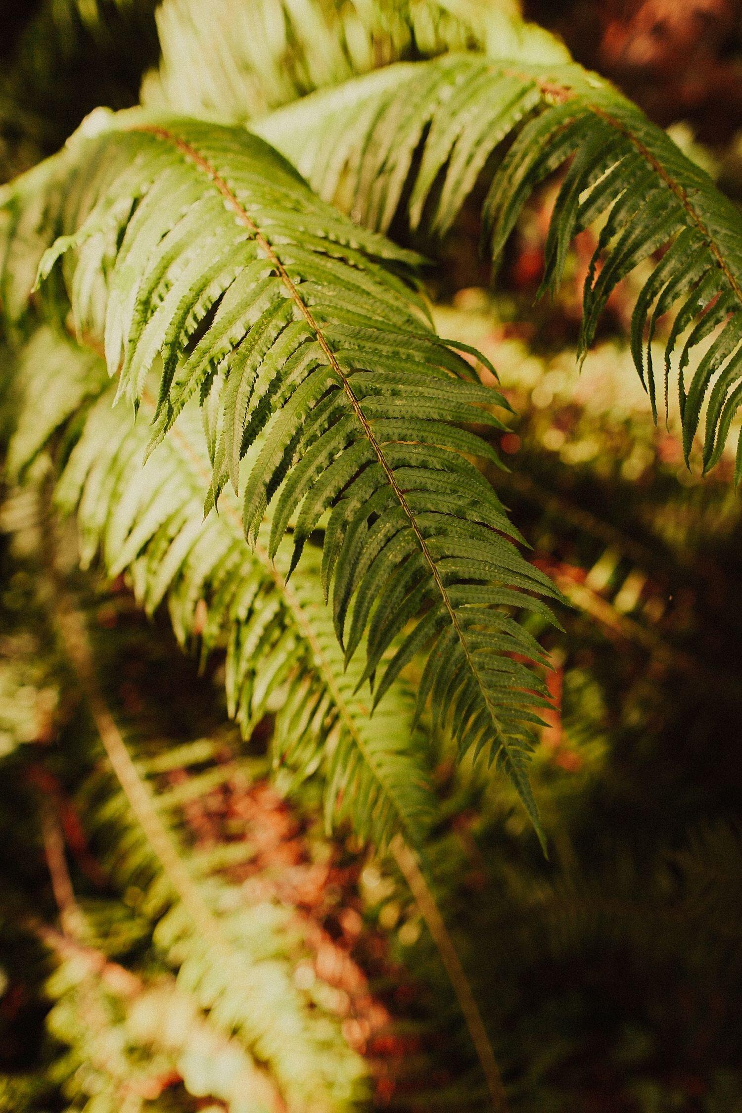 redwoods-california-maternity-photos_4312.jpg
