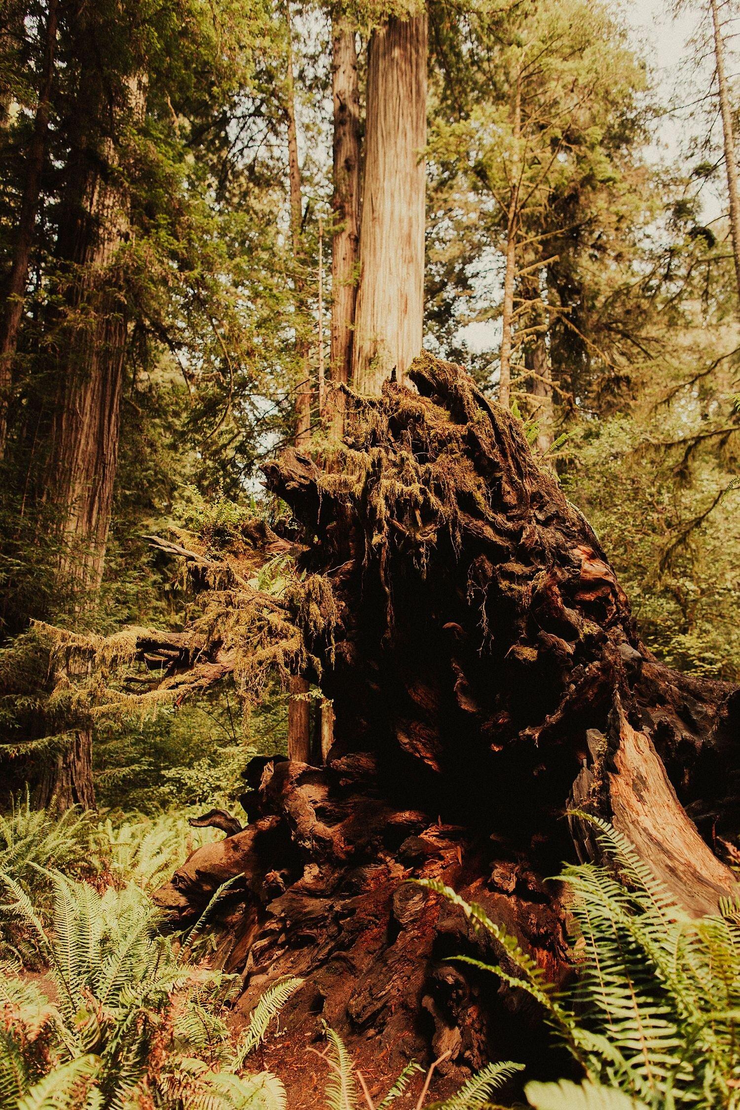 redwoods-california-maternity-photos_4314.jpg