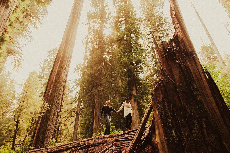 redwoods-california-maternity-photos_4321.jpg