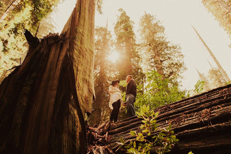 redwoods-california-maternity-photos_4322.jpg