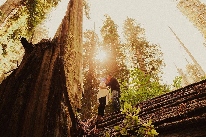 redwoods-california-maternity-photos_4324.jpg