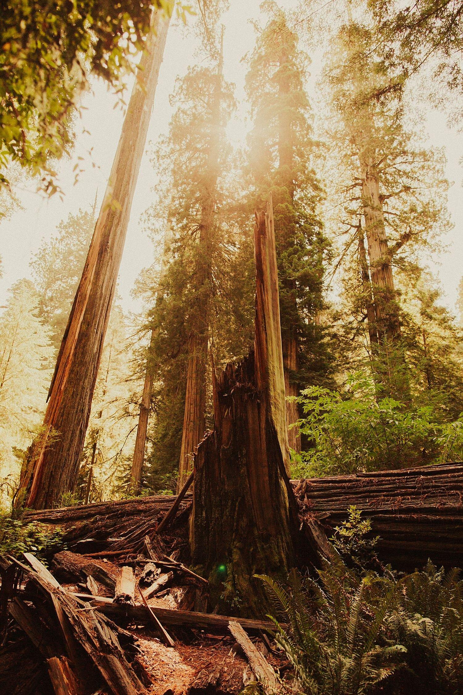 redwoods-california-maternity-photos_4326.jpg