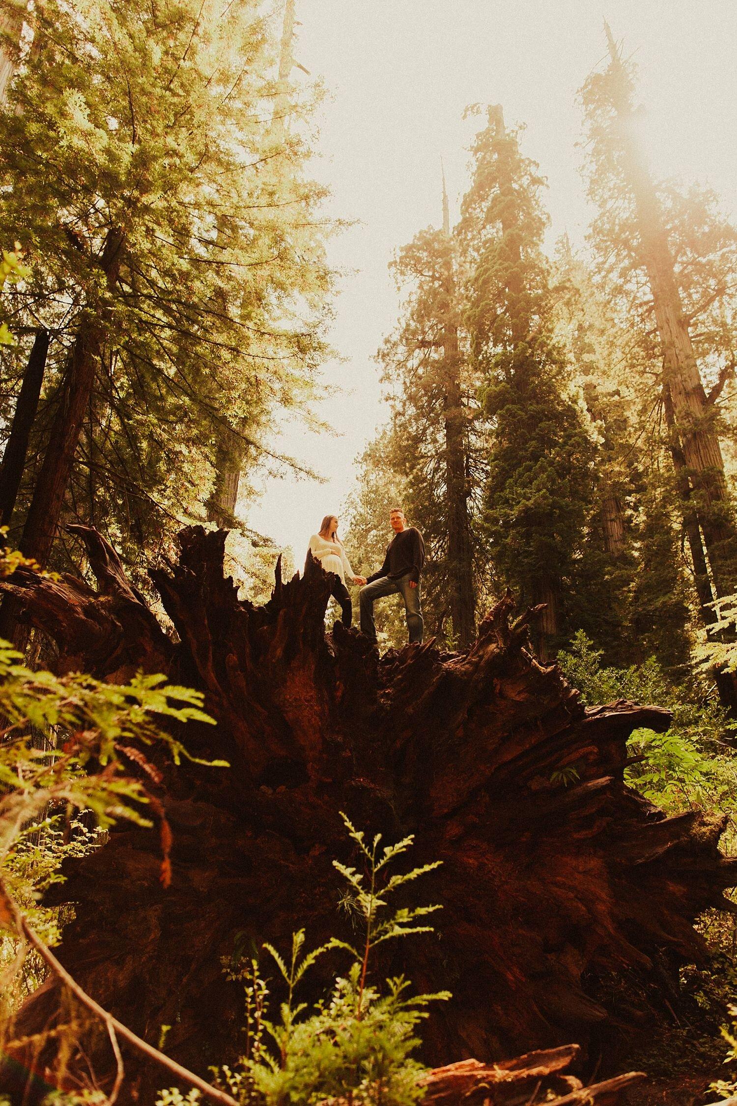 redwoods-california-maternity-photos_4327.jpg