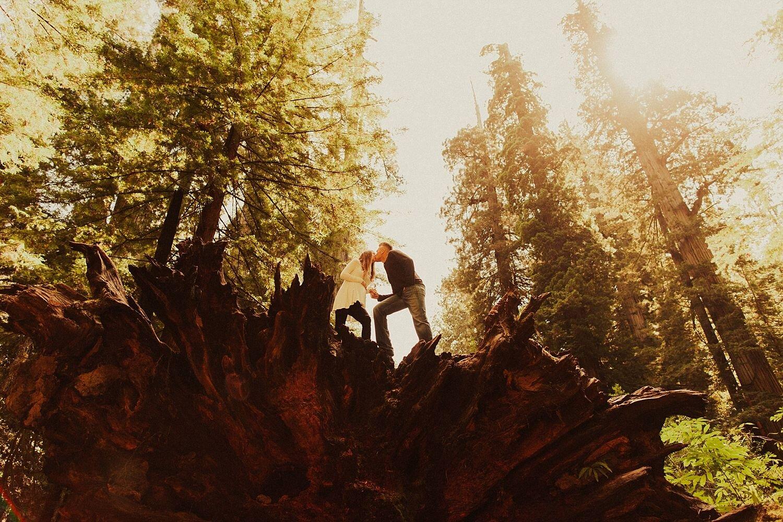 redwoods-california-maternity-photos_4328.jpg