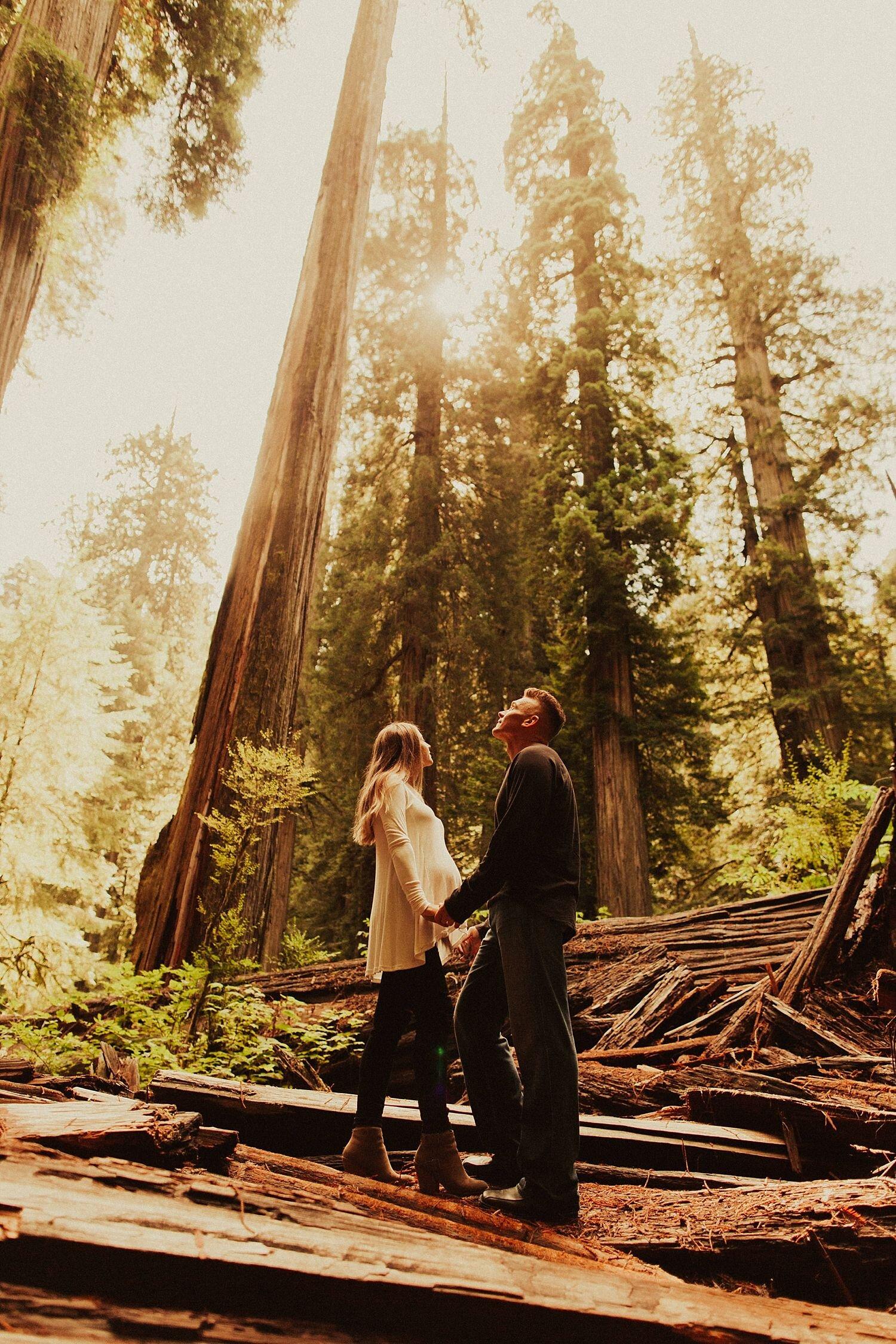 redwoods-california-maternity-photos_4329.jpg
