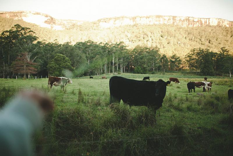 kangaroo+valley_070.jpg