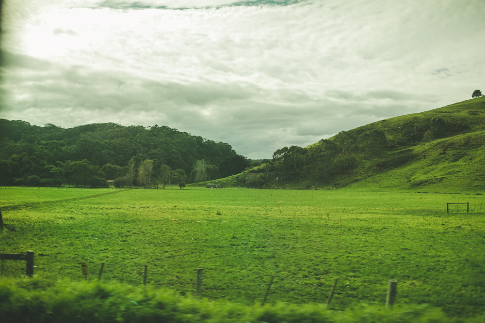 endless amounts of rolling meadows we drove past on our way to the 12 apostles.