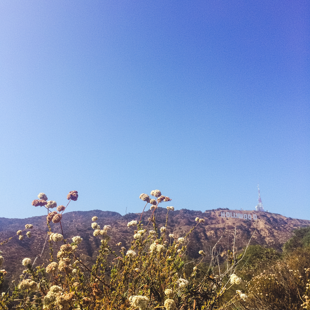 Sight seeing in the Hollywood Hills.