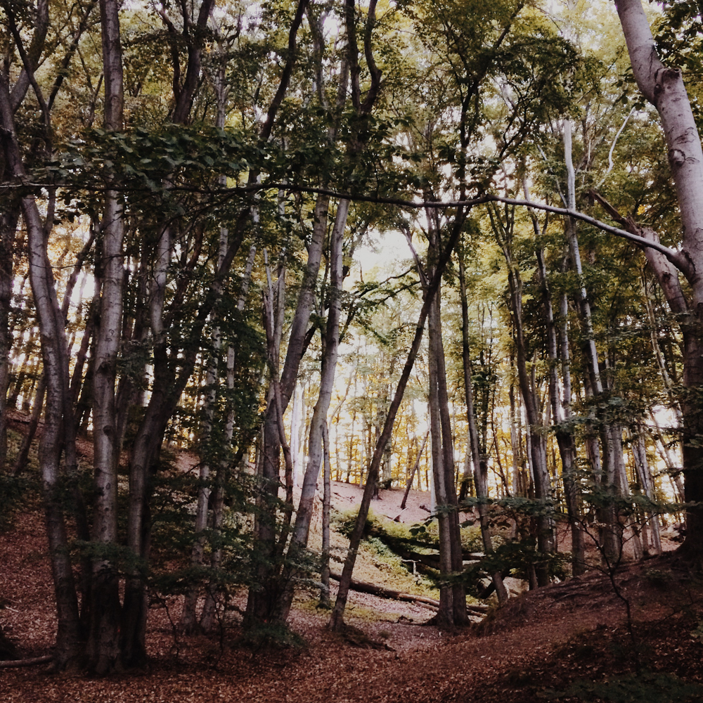 A beautiful forest in Gdynia.