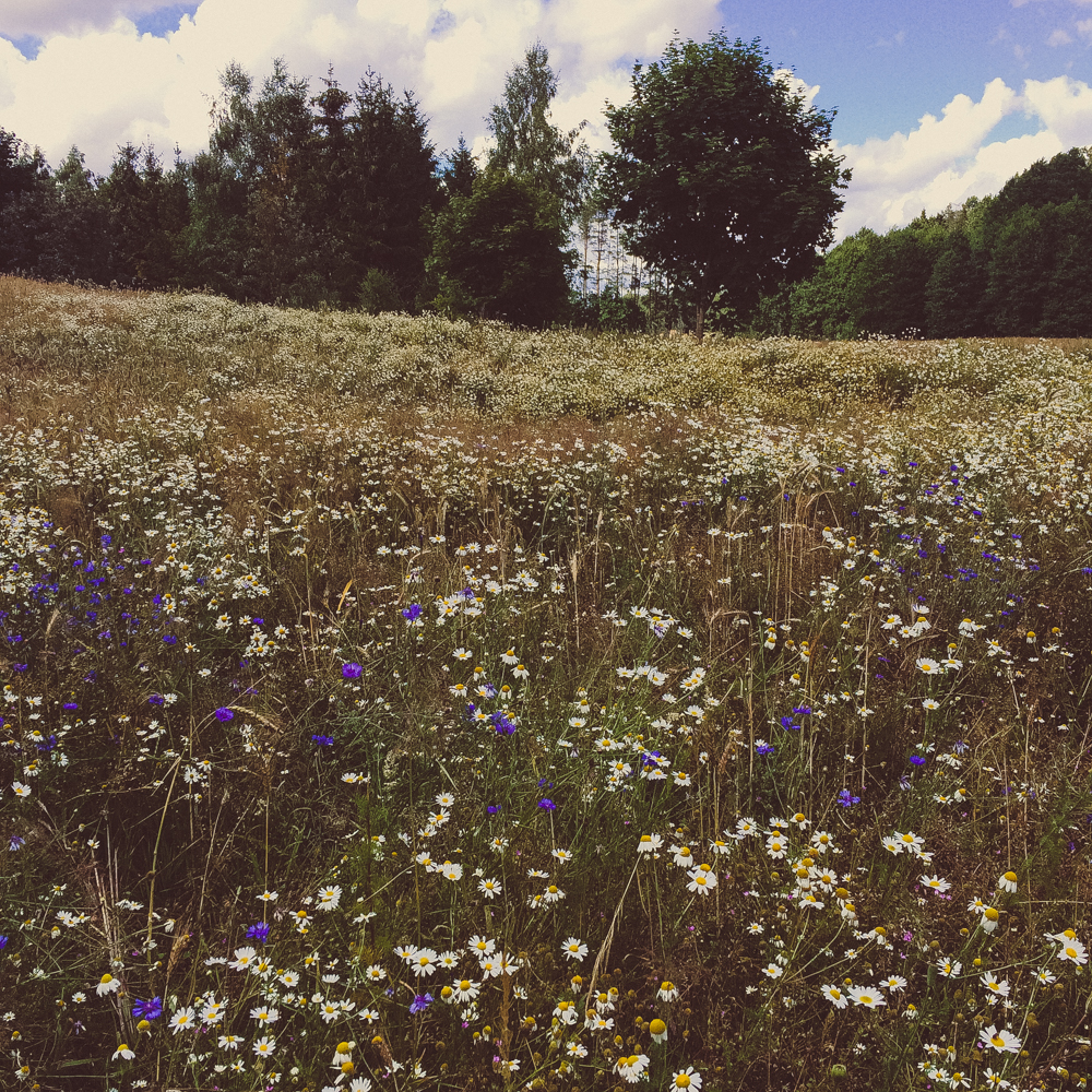 Stumbling across wonderful wildflower fields in the country. I was screaming with excitement!