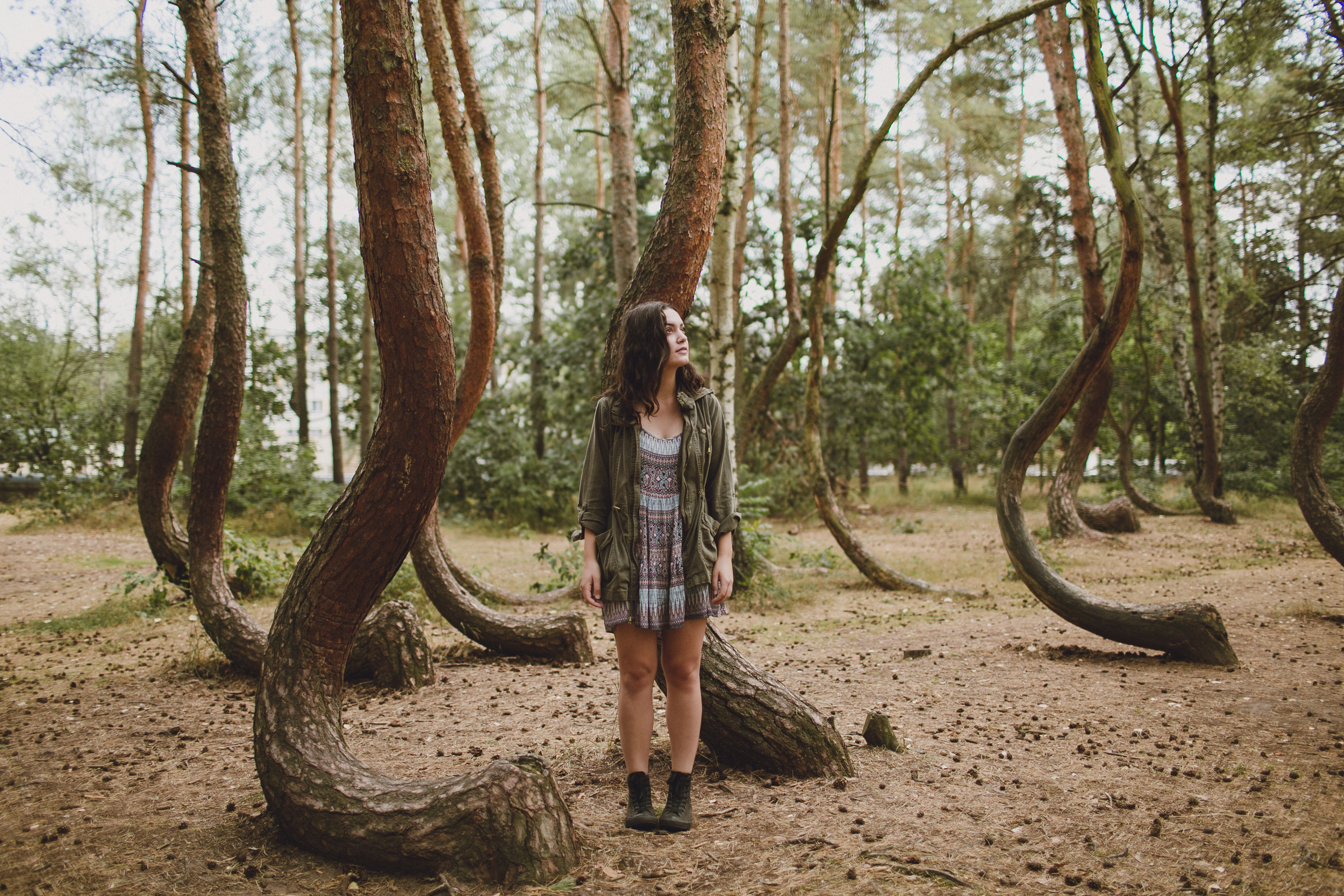 Crooked Forest Poland Julia Trotti,Funny Animal Pictures With Captions Clean