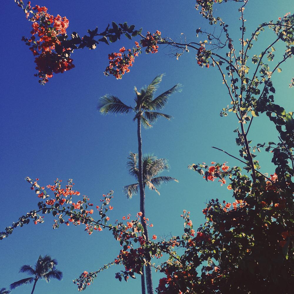 Pretty front gardens in Lanikai.
