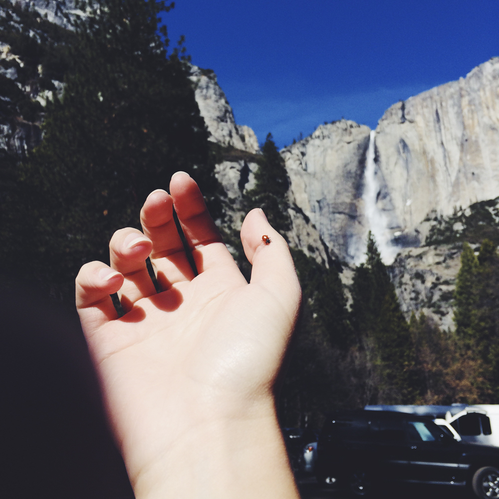 Hand out the window, in the breeze as we drove around Yosemite Valley and a ladybug landed on me!