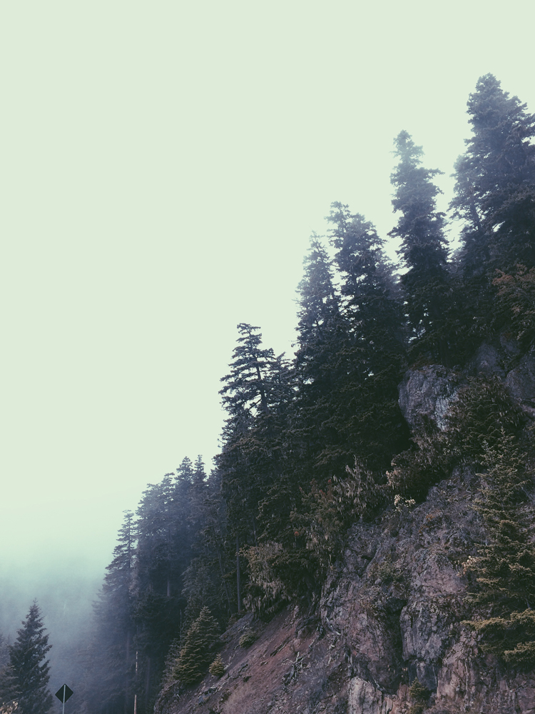 Driving up the foggy road to Olympic National Park.