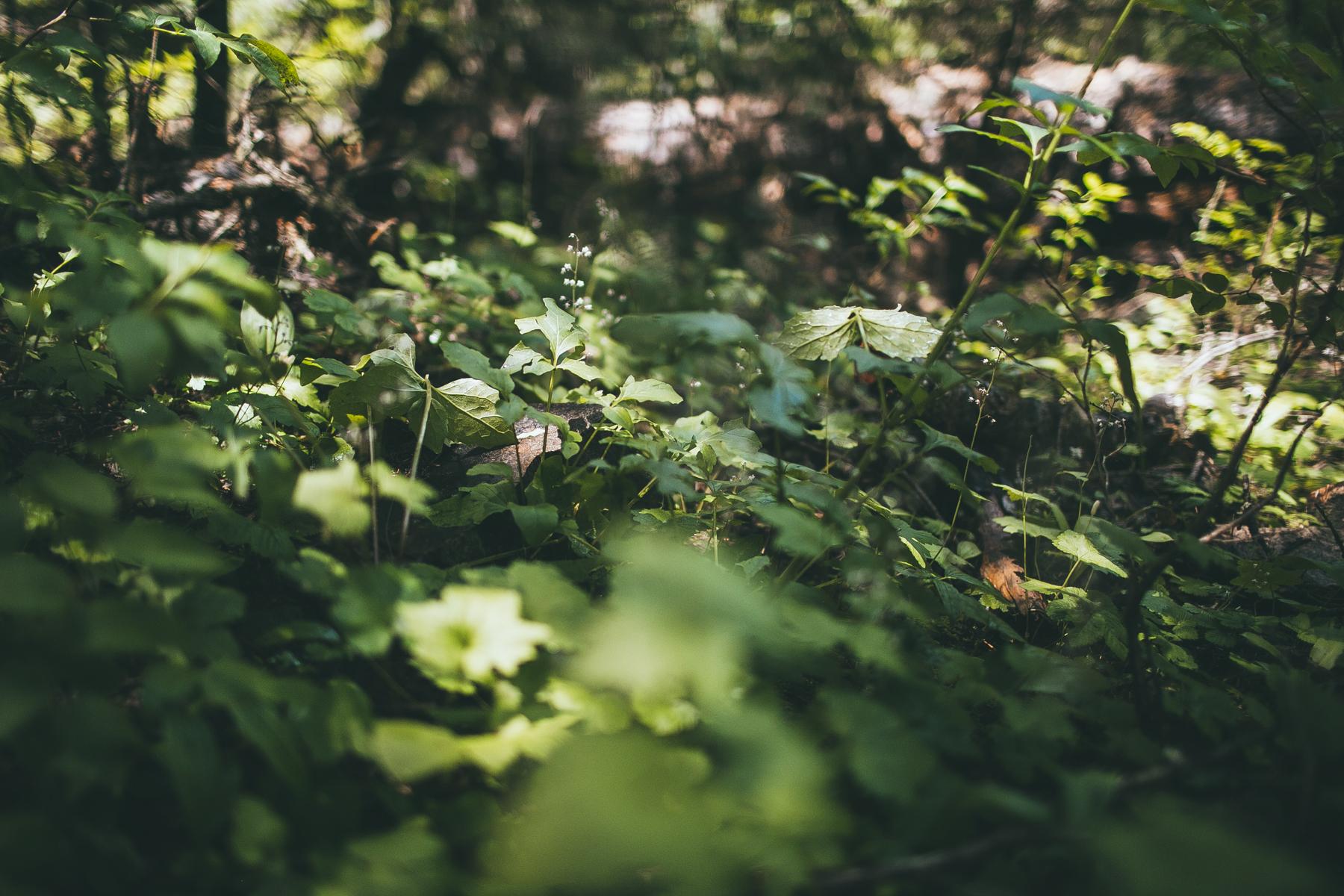 julia-trotti_north-cascades_019.jpg