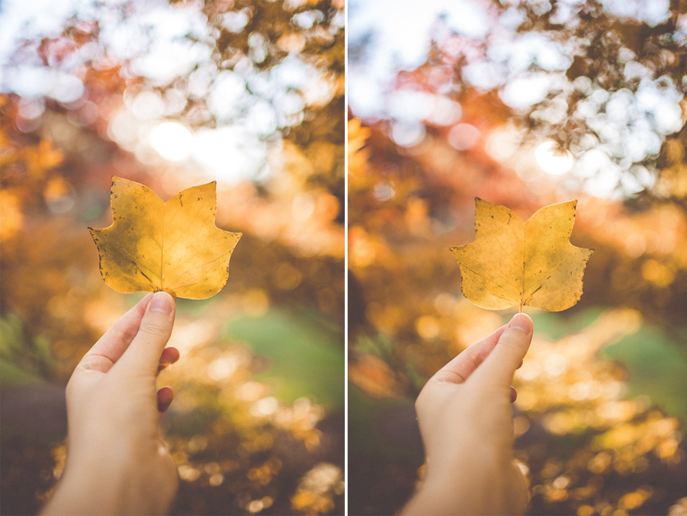 Left: 35mm mki / Right: 35mm mkii  Camera settings:  Shutter | 1/320  Aperture | f1.4  ISO | 100