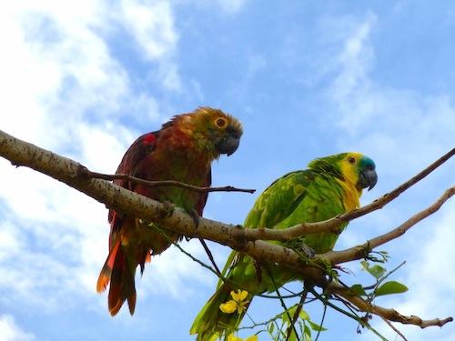 Abadiania birds.jpg