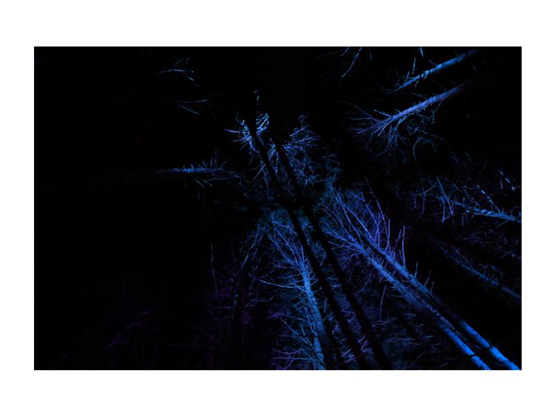 PHOTO_ART_HORI.JPEG_0000_The Woods.jpg