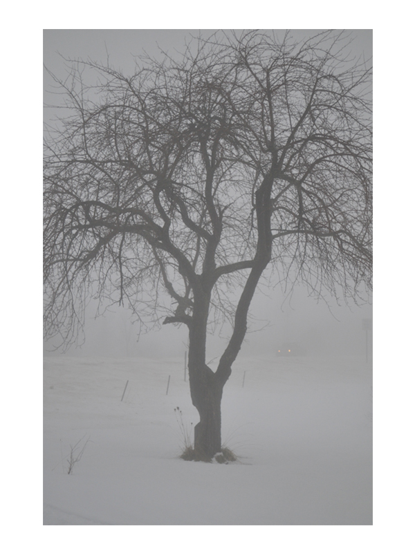 NATURE_VERT.JPEG_0007_The Winter tree.jpg