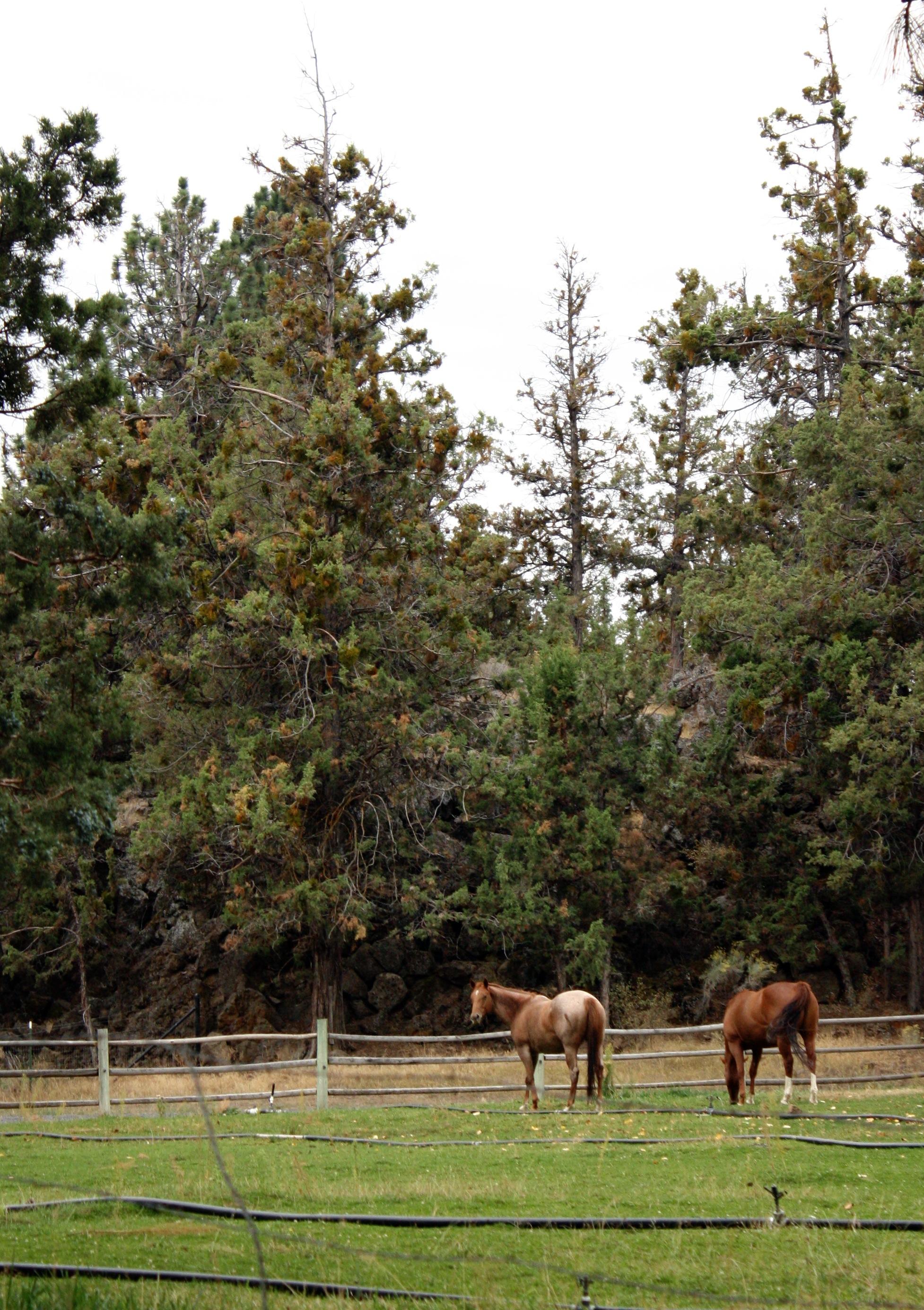 Horses-Bend_heatherbyhand.jpg
