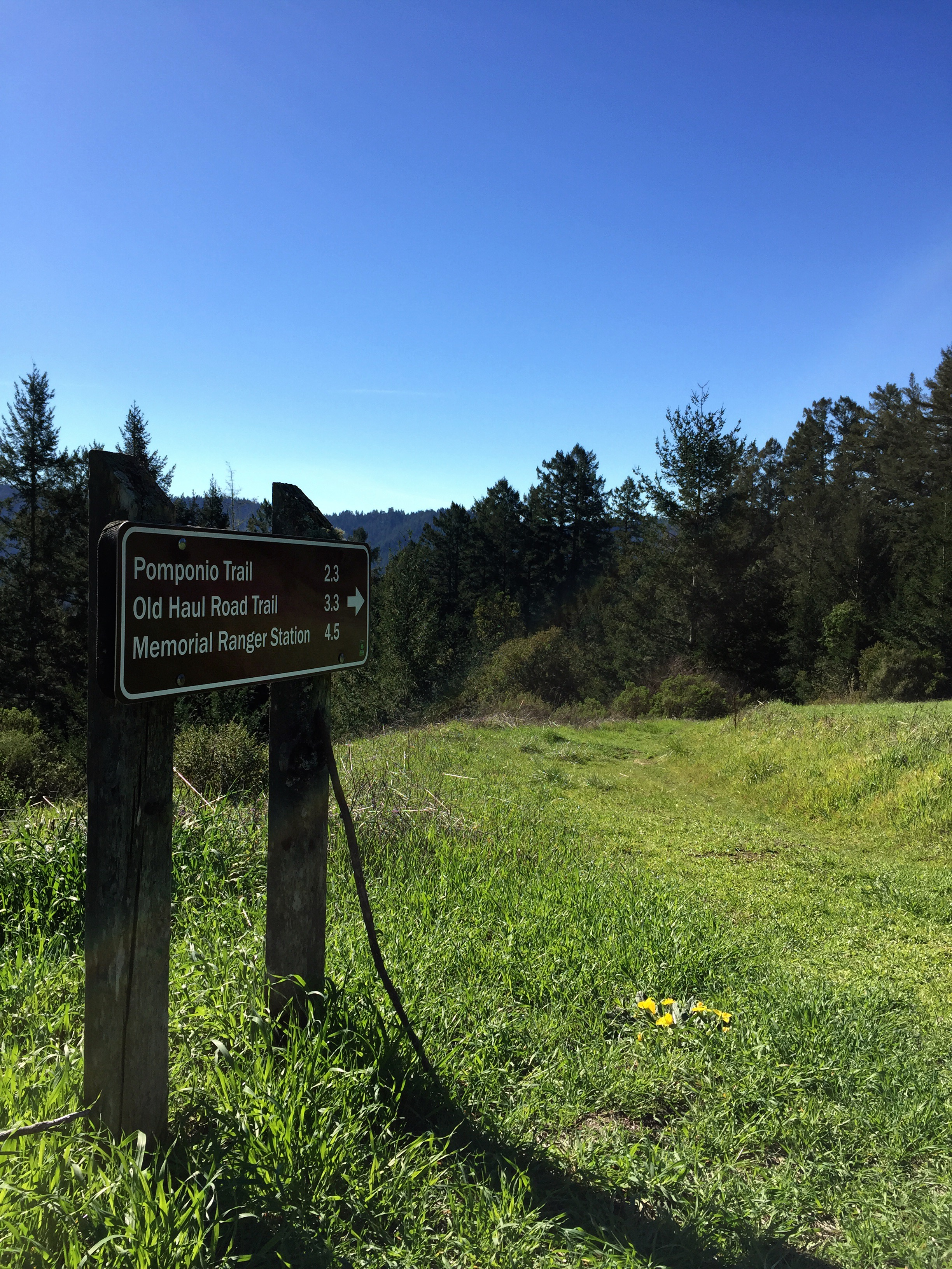 Pomponio-Trail-Sign_heather-by-hand.jpg