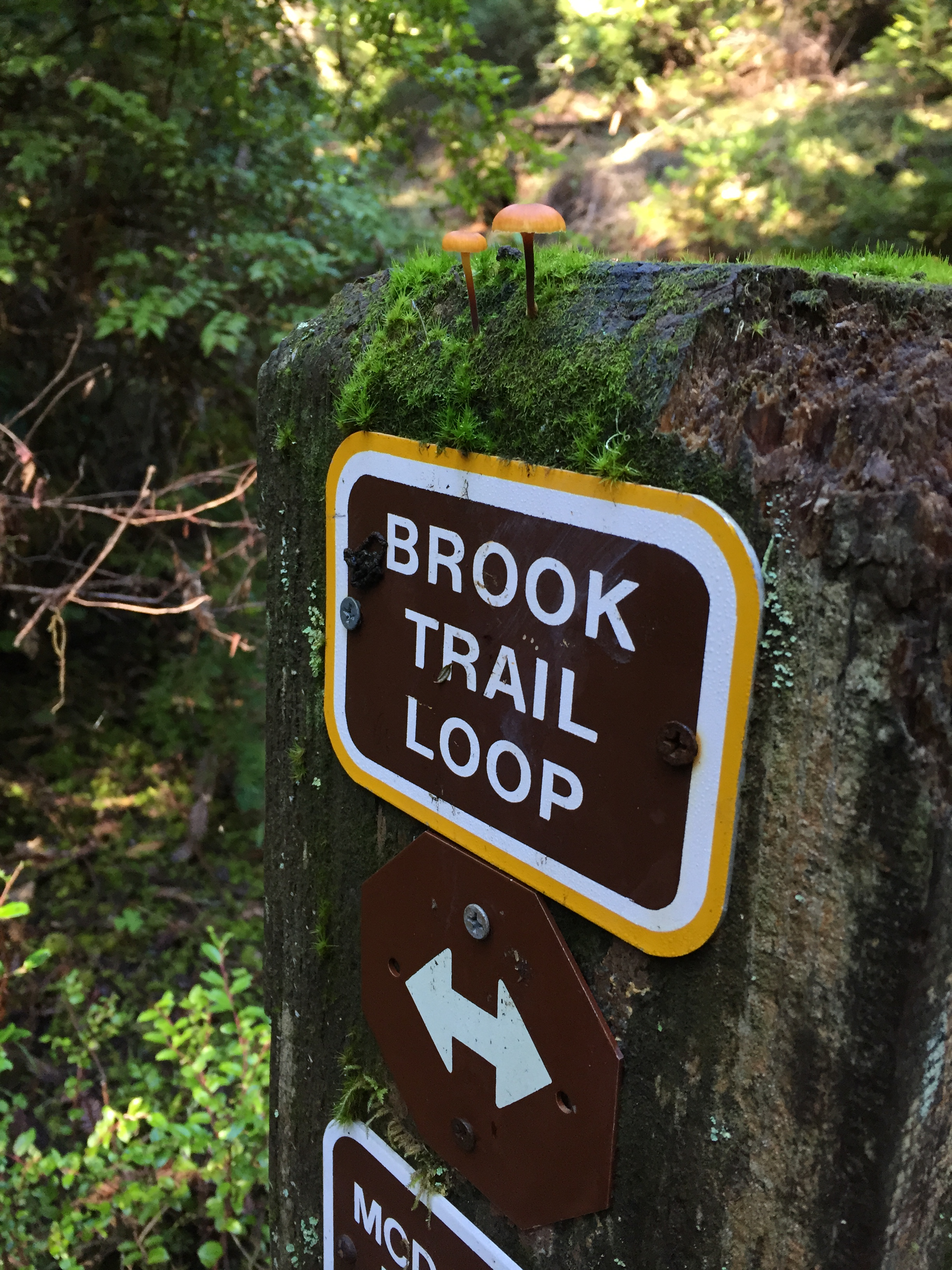 Brook-Trail-Loop_heather-by-hand.JPG