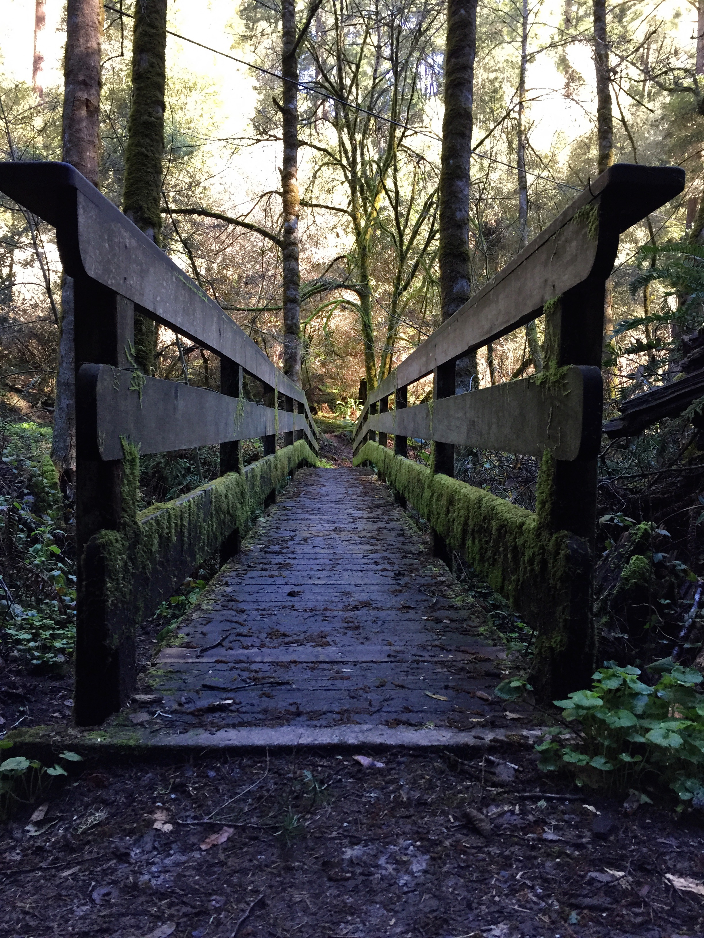 Foot-Bridge-Pescadero_heather-by-hand.jpg