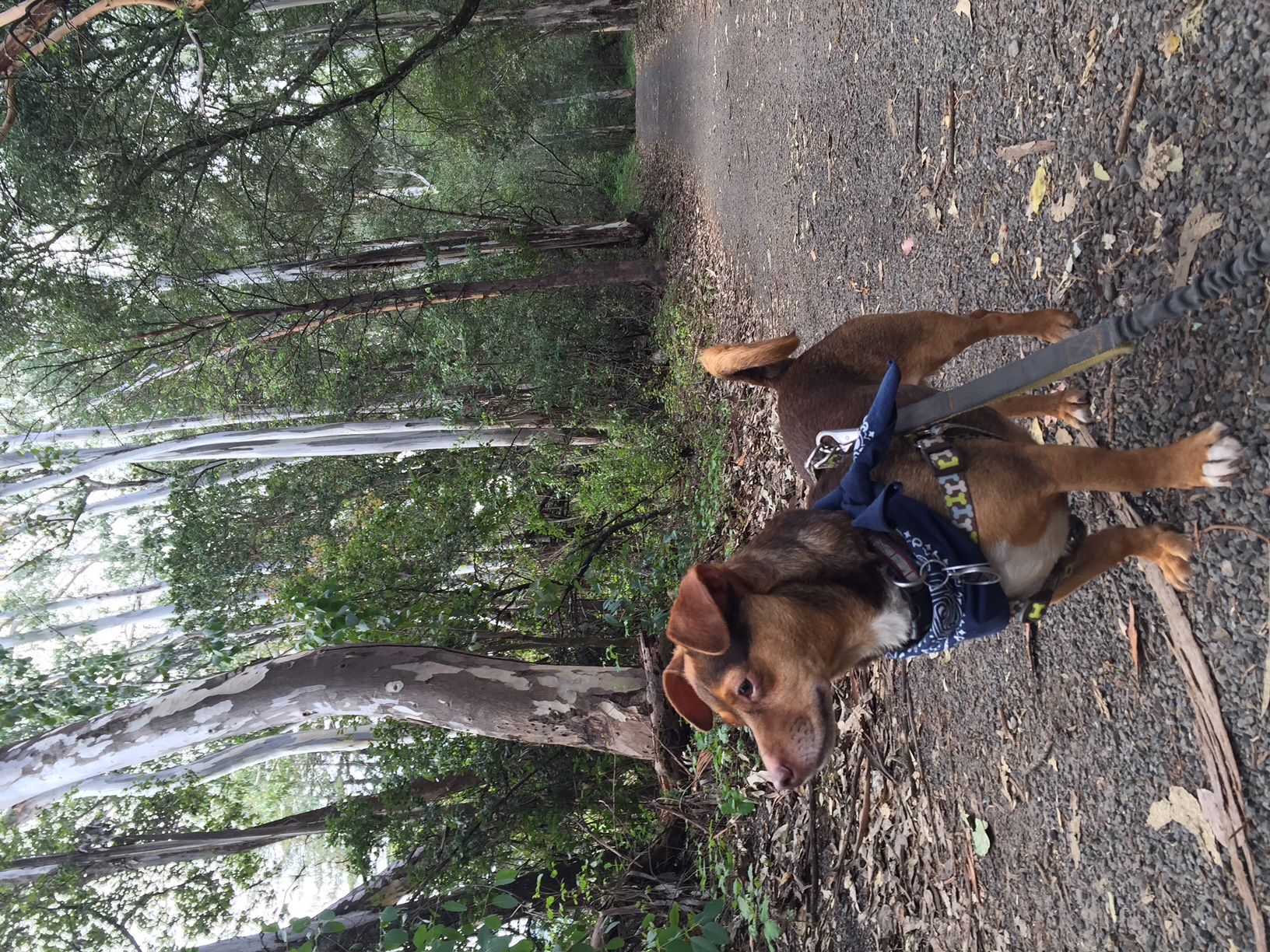 Rudy in the eucalyptus grove