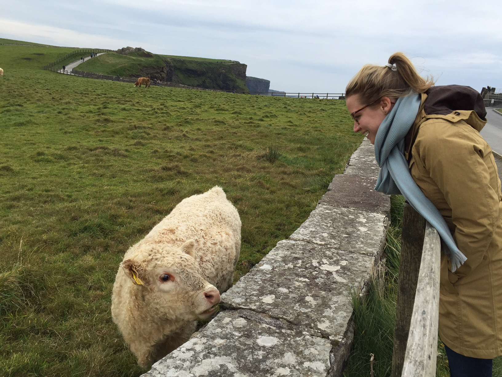 Cow-Friend_Cliffs-of-Moher_heatherbyhand.JPG