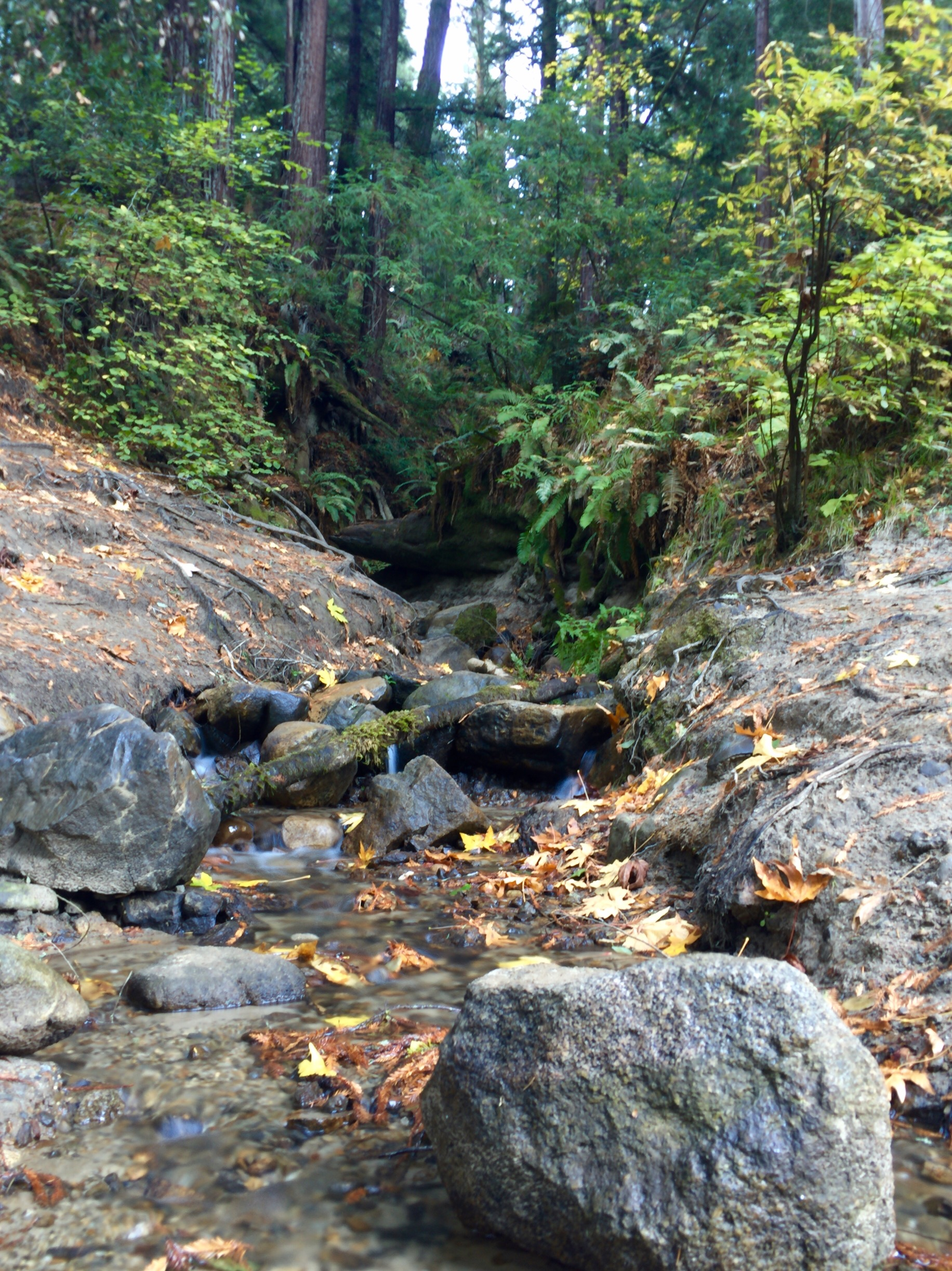 waterfall-henry-cowell_heatherbyhand.jpg