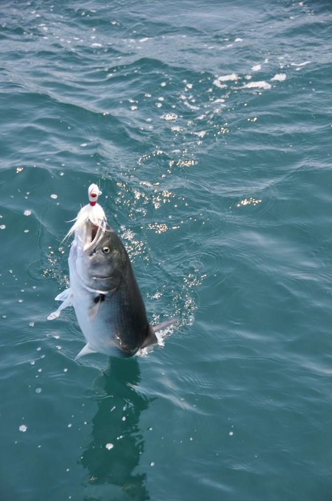 Here Fishy, Fishy...