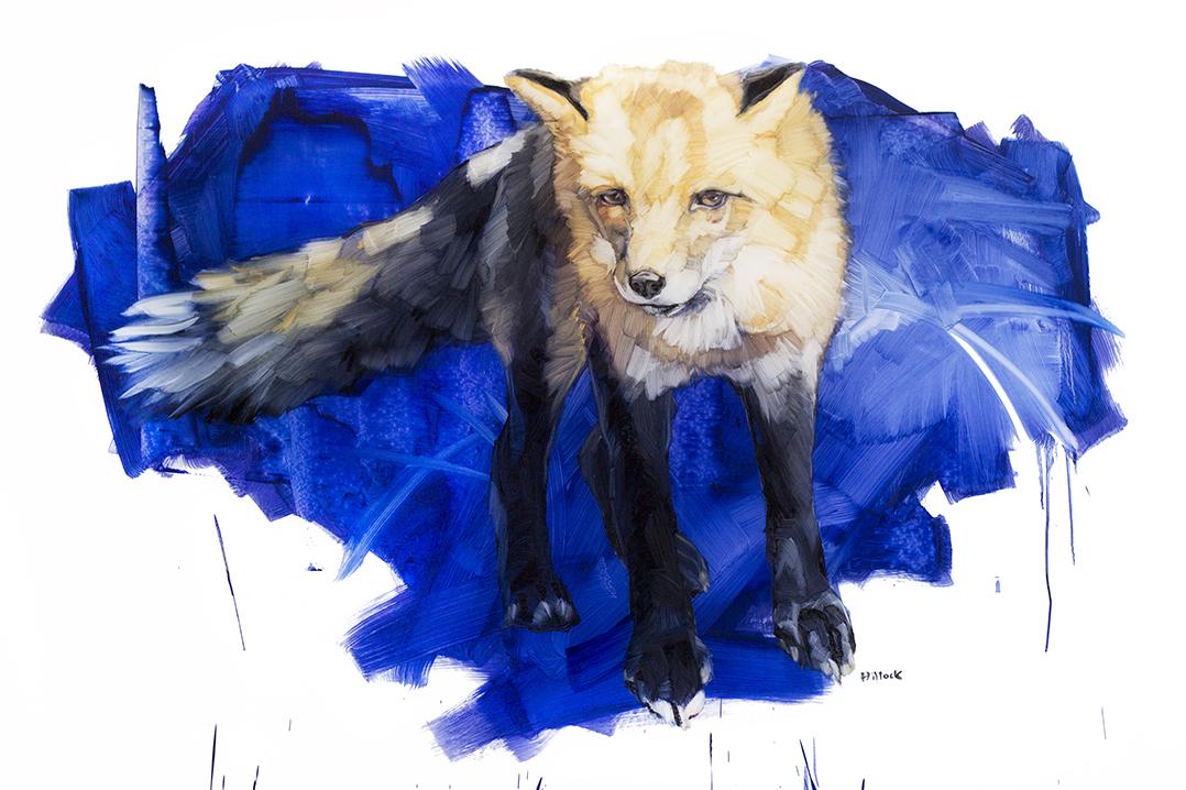 red fox on blue web.jpg