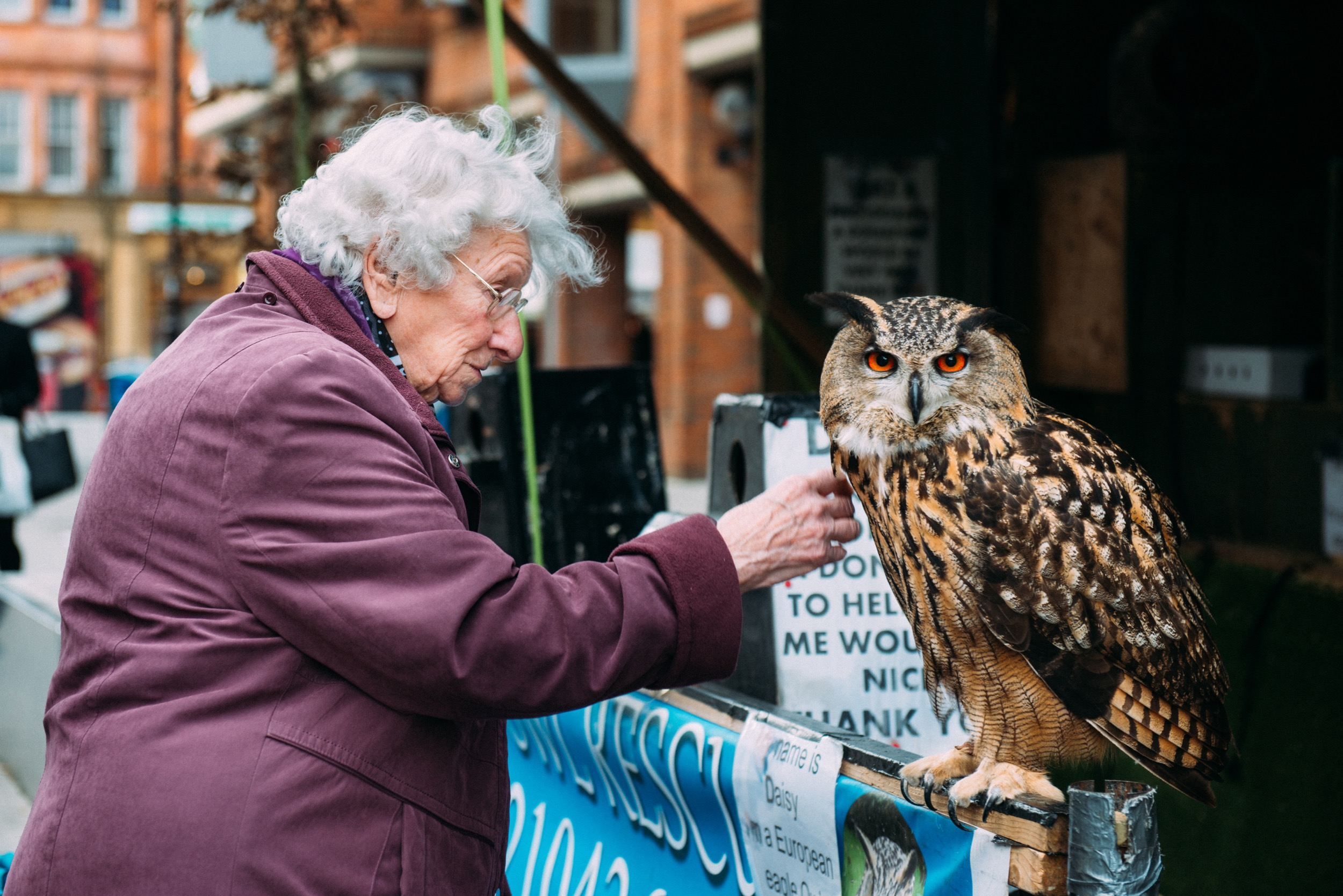 This owl was just amazing