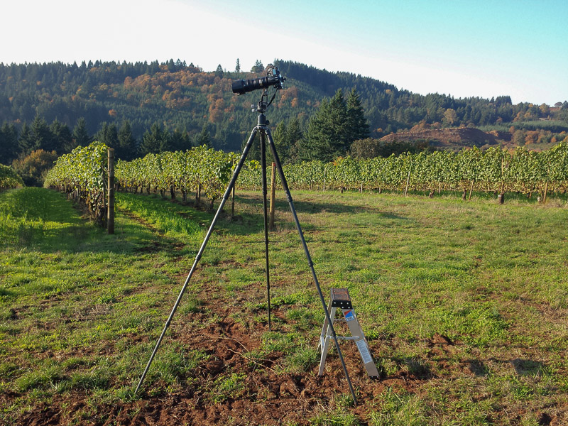 Using long legs to shoot over high grape vines. (Click to Enlarge)