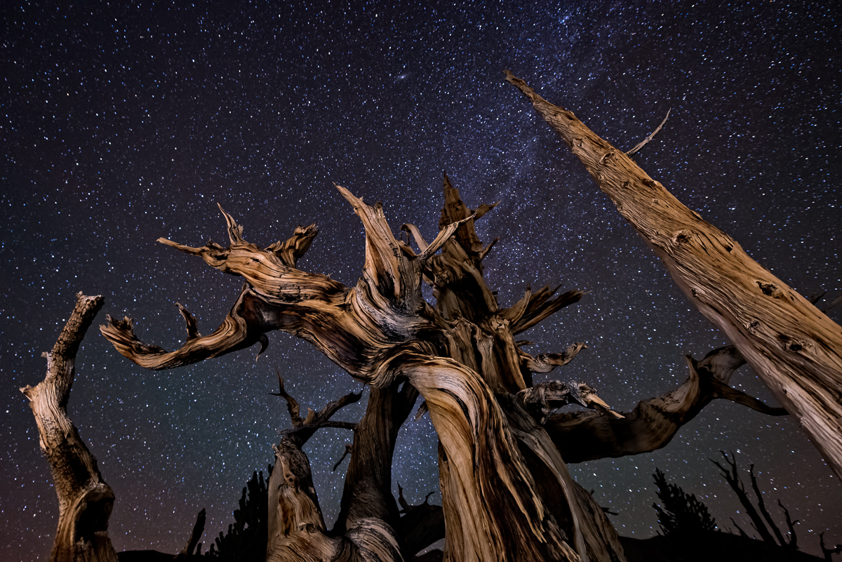 Bristlecones and Stars.  Technical Details:  Nikon D800, Nikkor 14-24 at f2.8 for 30 seconds at 4000 ISO