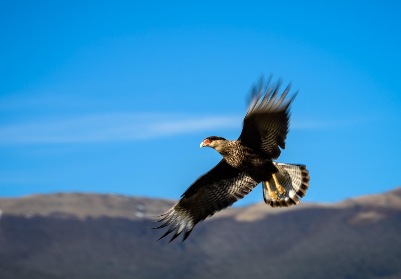 20151024_D810_Torres Del Paine_0004-Edit.jpg