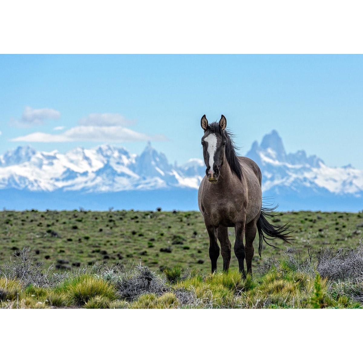 Patagonia Horse