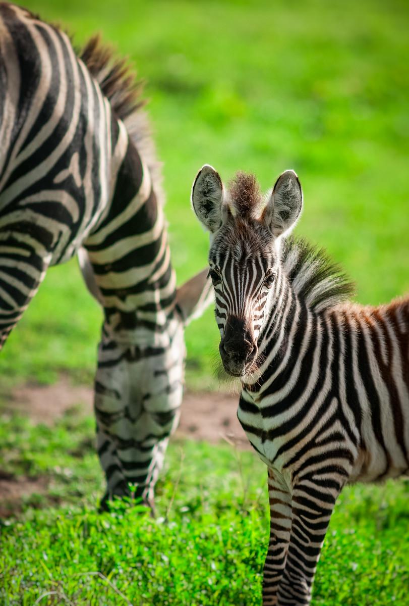 """Baby Giraffe"""