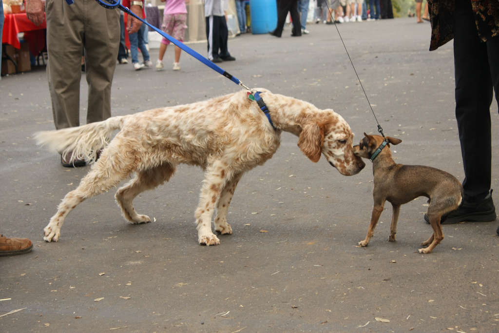 dogs-meeting-for-the-first-time-by-aresauburn.jpg
