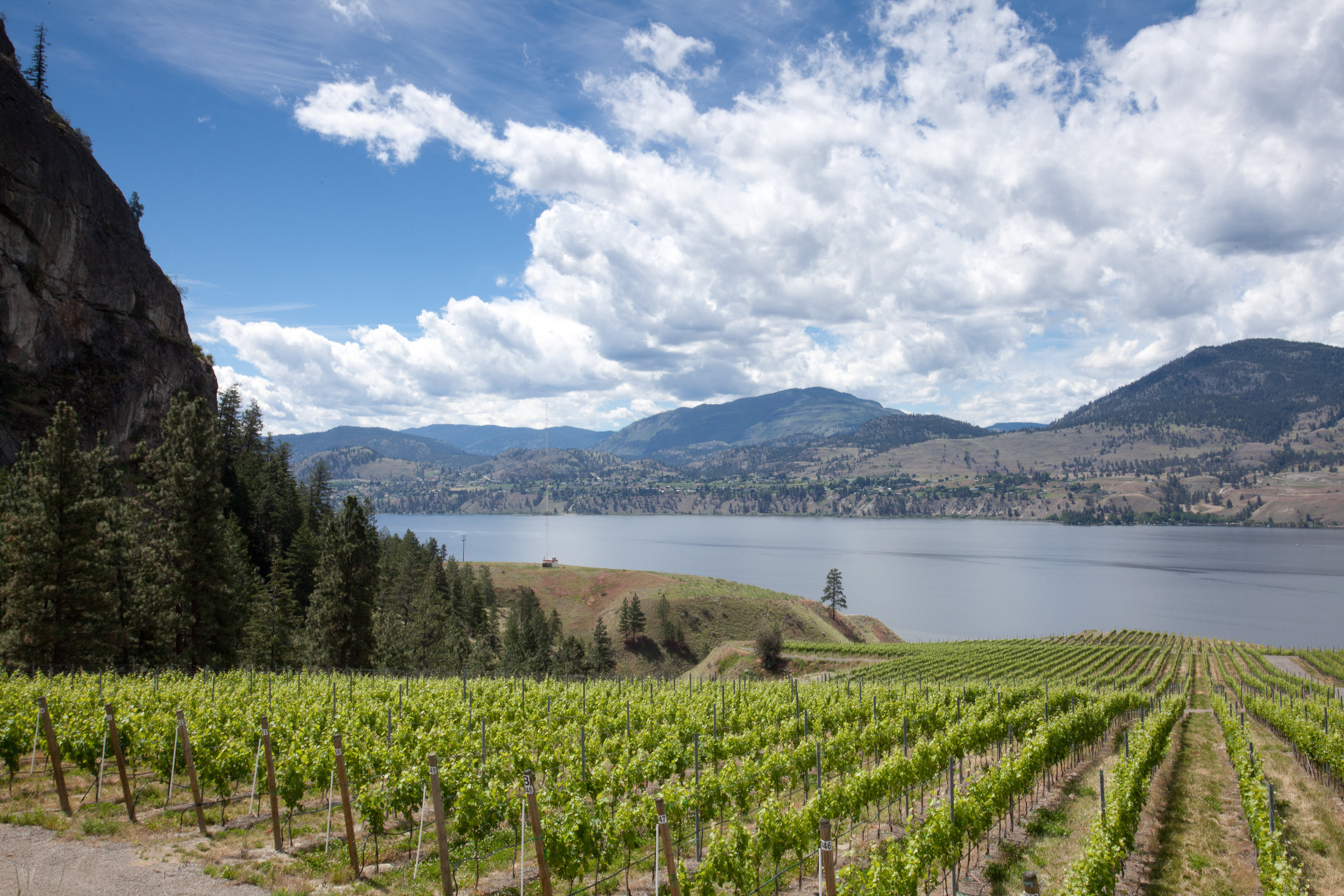 Okanagan Falls Winery in the Okanagan Valley wine region on Ashleyfisher.ca