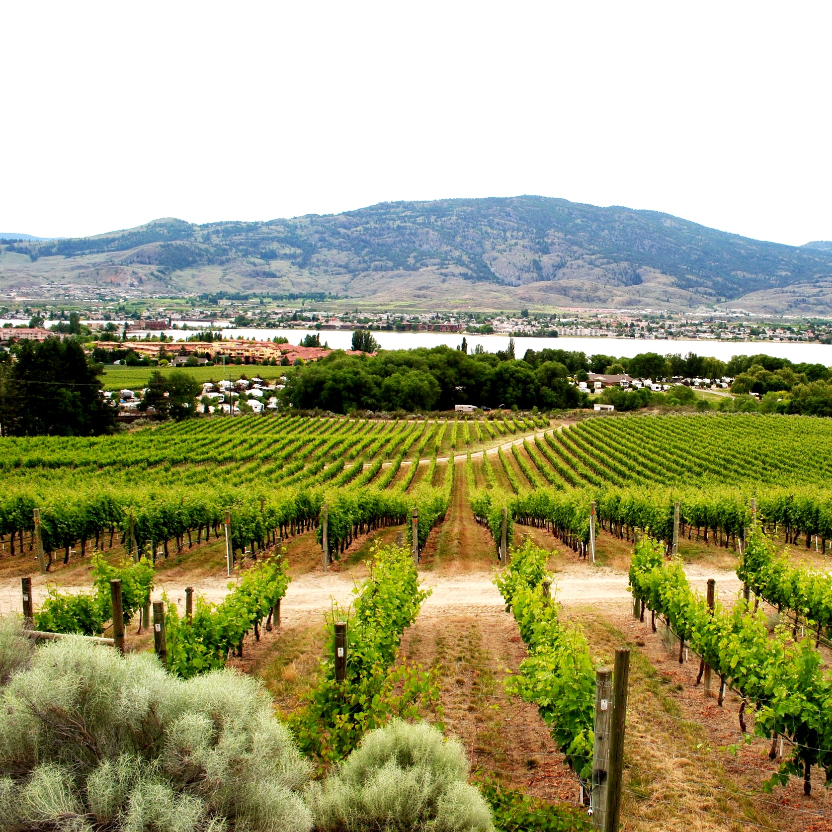Nk'Mp Winery in Osoyoos BC on Ashley Fisher.ca