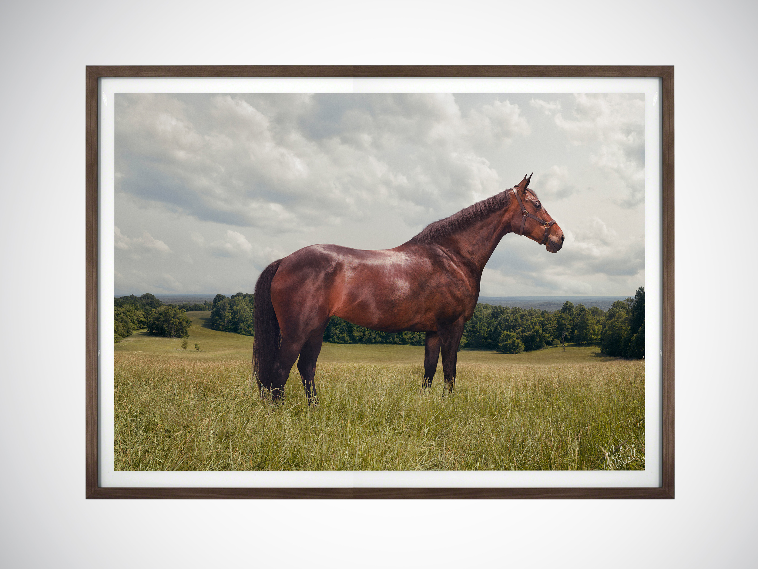 Commissioned Artwork - For his Equine Art, Leon is seeking commission from horse owners throughout the world. It is his ambition to be granted access to the industry's most prized horses as well as those privately owned to produce unique and exquisite portraits for private collectors.Having trained in the analogue world of film and chemicals and worked through the industry's seismic shift to a digitised medium, Leon considers that he is fortunate in having to straddle and master both worlds.Gained through years of still life discipline, his precise methods, deliberate decision making, and meticulous attention to detail have given Leon an aesthetic to his artwork that fewer and fewer in his field can rival. His use of newer technologies only enhances an already consummate craft.