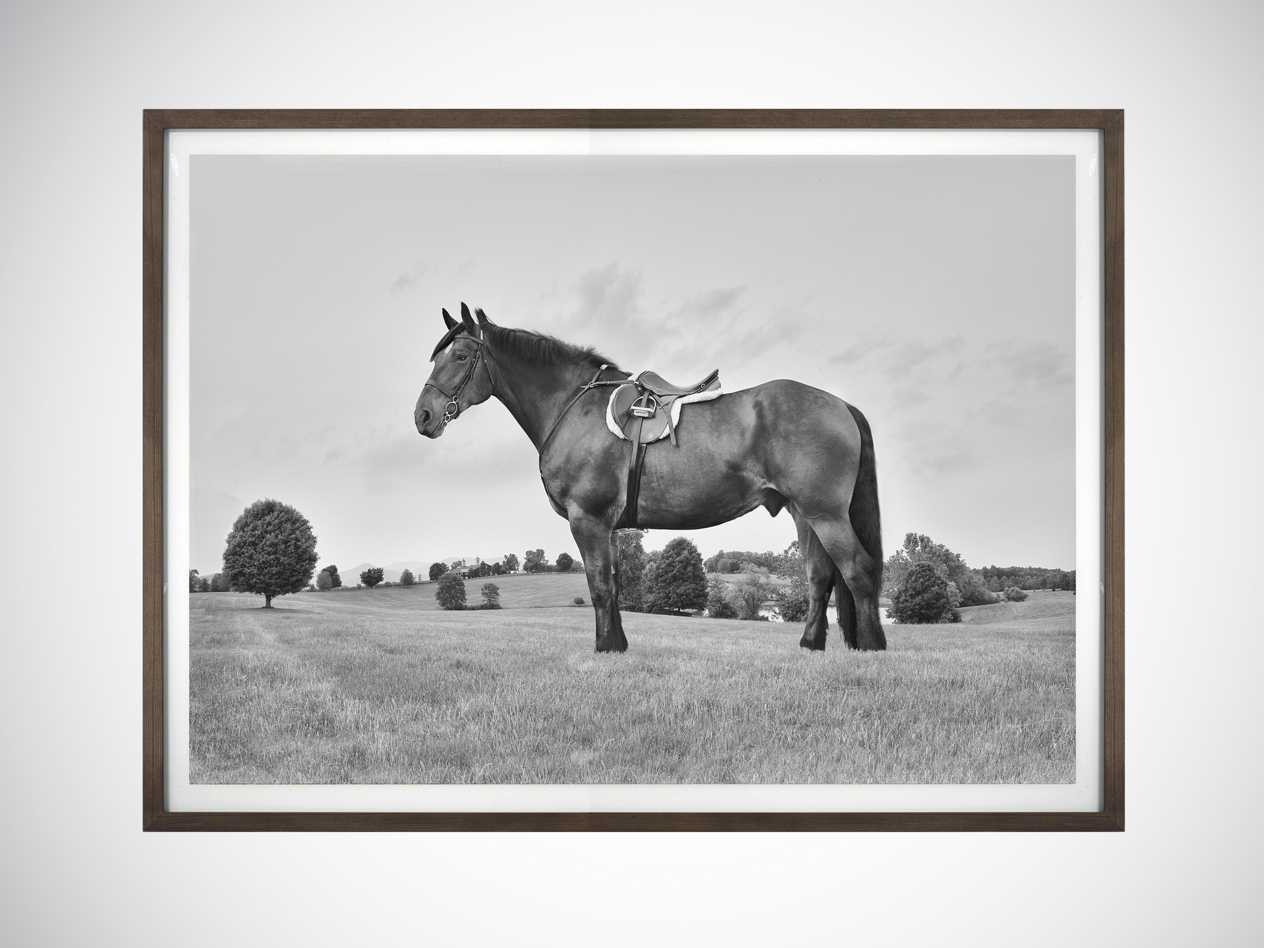 Post Production - Although Leon's equine portraiture displays a timeless and almost effortless quality, it belies the fact that each image is meticulously layered and seamlessly put together using complex modern photographic techniques.Hempstead May is a post production and print house with studios in New York and London. They are at the cutting edge of the fashion and luxury brand industries.They are responsible for many iconic advertising campaigns and editorial stories, and work alongside many of the world's leading fashion and advertising photographers. Leon has worked with Jon Hempstead and India May for a number of years and considers them an integral part of his process.