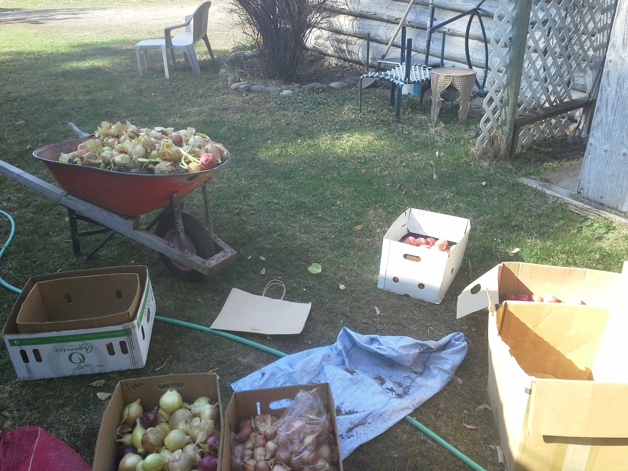 Early spring...cleaning out the root cellar.