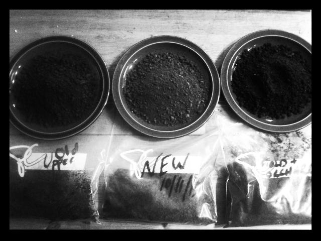 Preparing soil samples to send off for analysis.