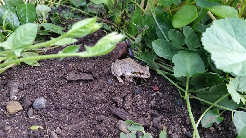 Frog in the greenhouse! Frog in the greenhouse!