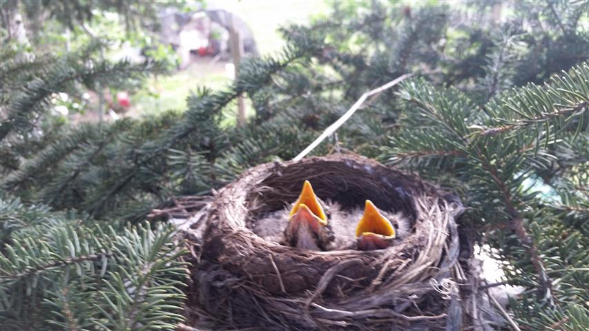 Baby robins. A day later they were gone and presumed eaten. Sorry, folks.